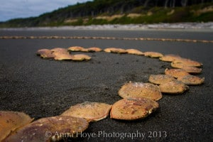 Anna created and photographed this Andy Goldsworthy inspired temporary sculpture on the Olympic Peninsula.